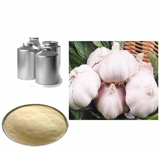 allicin powder extract