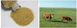 Choline Chloride feed grade