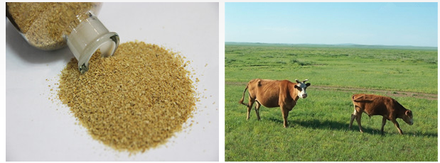 Choline Chloride feed grade