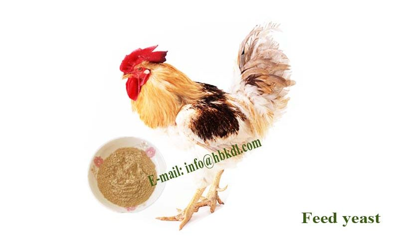 feed yeast for poultry