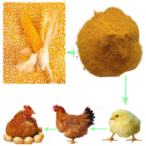 Animal-Feed-Corn-Gluten-Meal