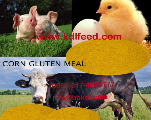 High Protein corn gluten meal (Feed grade)