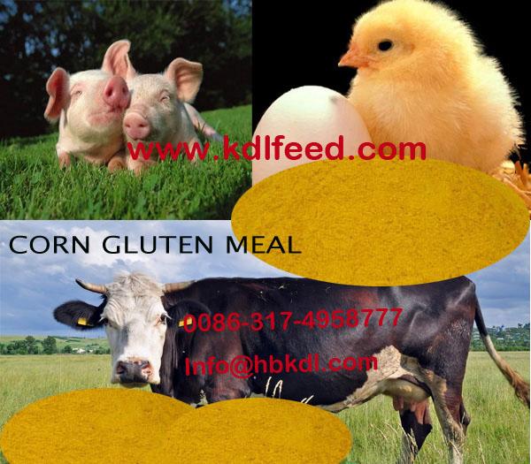 High Protein corn gluten meal (Feed grade)