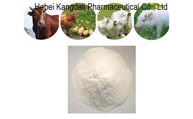 DCP DiCalcium Phosphate poultry Feed Grade-DCP18%