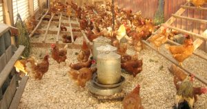 Soybean-meal-for-animal-feed-cheap-price