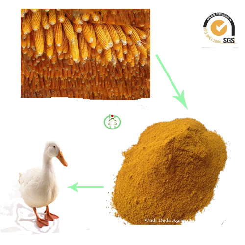 60% Protein Corn Protein Meal Corn Gluten Meal